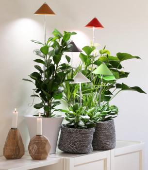 LED-Pflanzenlampe SUNLiTE, Venso