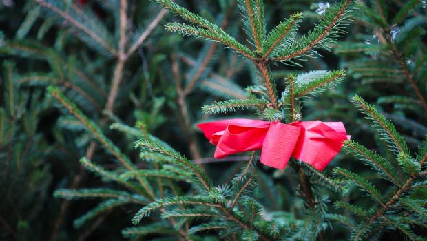 Der Trend zum Zweitbaum und zum Singlehaushalt hält den Absatz von Weihnachtsbäumen stabil. Foto: Pixabay