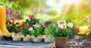 Plastikfreie Pflanzentöpfe