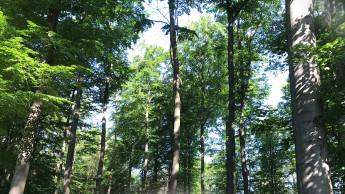 Windhager unterstützt Baumpflanzaktion