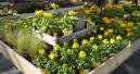 Grüner Fachhandel kann in elf Bundesländern vorzeitig öffnen