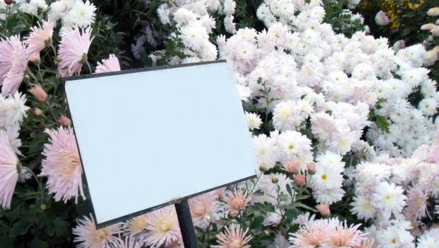 Toom verzichtet bei fast allen Pflanzen im Beet- und Balkonbereich der Eigenmarke auf die Pflanzenstecker (Bild: Picasa).