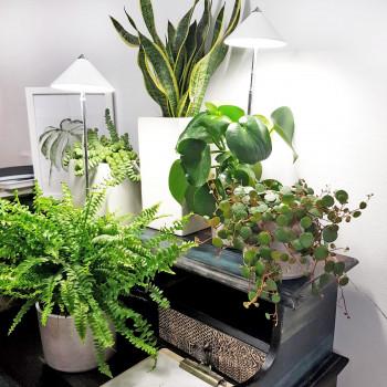 Venso, Sunlite, LED-Pflanzenlampe