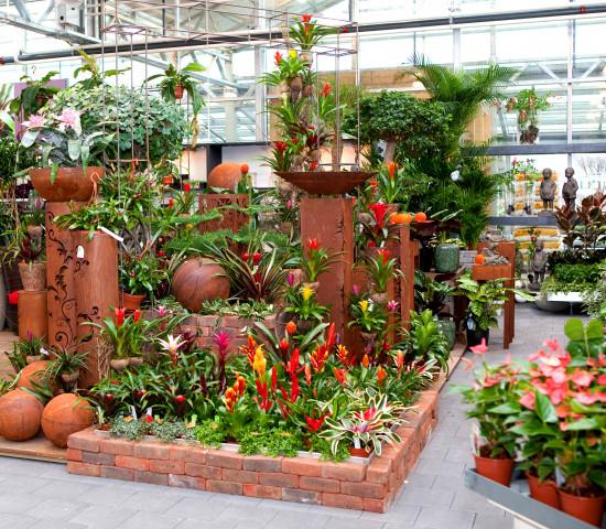 Beispiel für eine Pflanzenpräsentation bei Meier.
