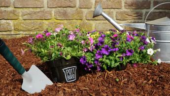 Aldi Süd bietet Pflanzen in abbaubaren Blumentöpfen von Pottburri an