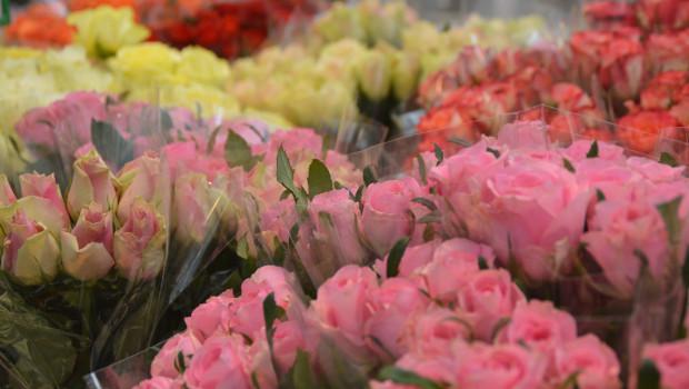 Rosen sind zu Muttertag die Lieblinge des Einzelhandels - dieses Jahr gerne auch nicht nur in Rot.