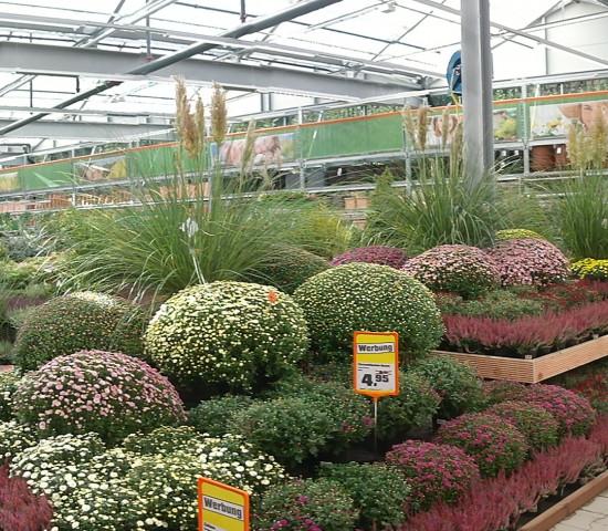 Das Obi-Gartencenter ist rund 2.500 m² groß.