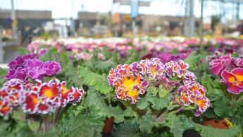 Gartencenter-Check morgen Abend im ZDF