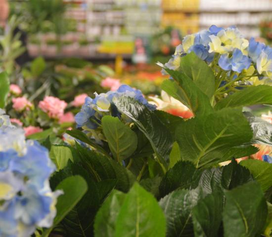 Das Thema Pflanze bleibt für die Gartencenter zentral.