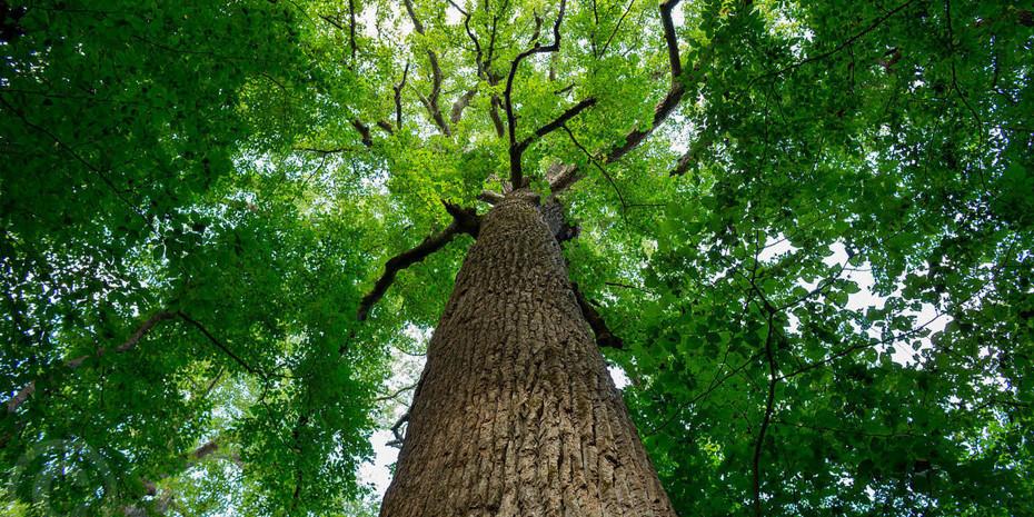 Nachhaltige Bewirtschaftung der Wälder