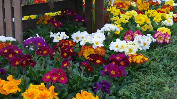 Die Gartenbaubetriebe hatten unter demwitterungsbedingten dramatischen Absatzeinbruch von Beet- und Balkonpflanzen in diesem Frühjahr zu leiden.
