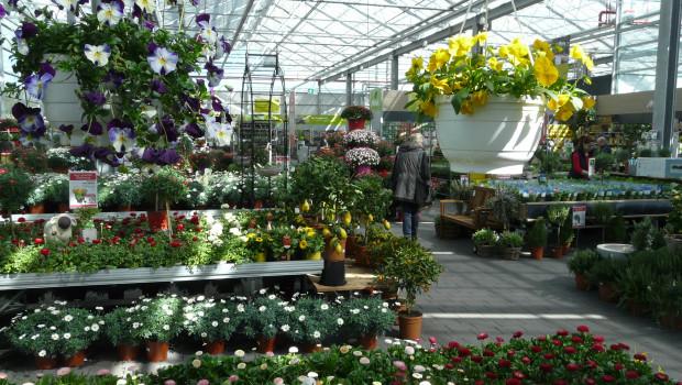 Bei den Gartencentern erwartet GfK Geomarketing ein weiteres Wachstum der Verkaufsflächen.