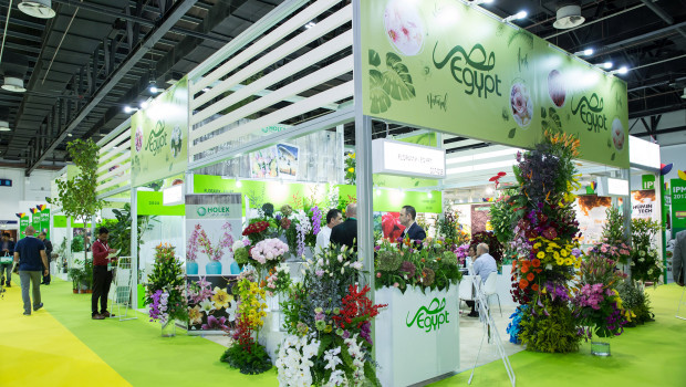 Auf der IPM Dubai zeigten 103 Unternehmen ihre Produkte aus den Bereichen Pflanzen, Gartenbautechnik, Floristik, Ausstattung, Logistik, Pflanzenpflege sowie Ausstattung für den Garten- und Landschaftsbau.