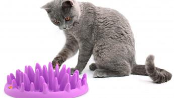 Catch, kitty, catch!