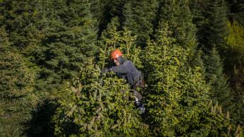 Toom engagiert sich für fairen Christbaum-Samen aus Georgien