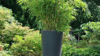 Sechs Bambus-Züchter vermarkten gemeinsam