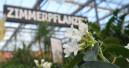 Click & Collect vor allem bei Baumarkt- und Gartencenterkunden beliebt