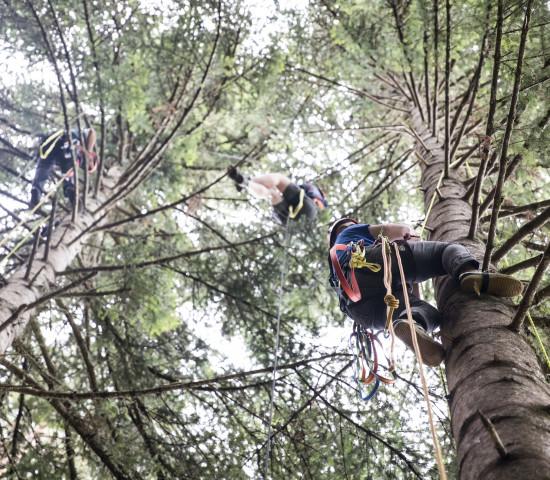 Die Erntehelfer bekommen von Toom und Fair Trees ein professionelles Kletter-Equipment gestellt.