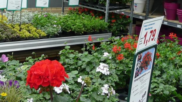 Der Gartenhandel hatte im ersten Quartal Umsatzrückgänge zu verzeichnen.