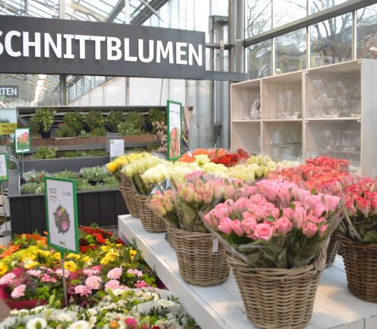 Schnittblumen bleiben trotz eines um 1,5 Prozent geschrumpften Marktvolumens das wichtigste Segment.