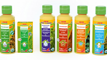 Professionelle Pflanzenpflege