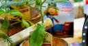 Landgard meldet nochmals höhere Nachfrage nach Gemüse