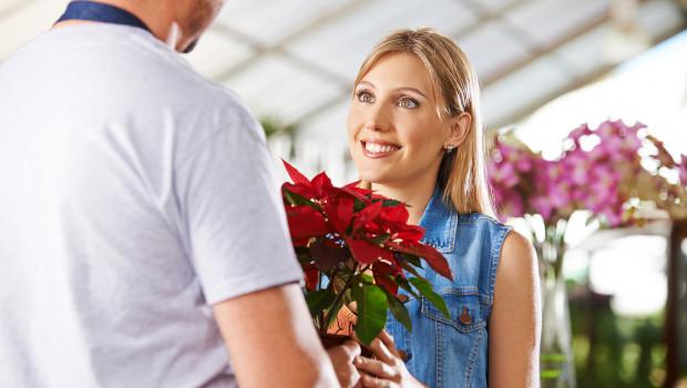 2014 wurden rund 340 Mio. fair produzierte und gehandelte Blumen in Deutschland verkauft. Nun gibt es ein solches Angebot auch für Weihnachtssterne. Foto: Robert Kneschke, Shutterstock
