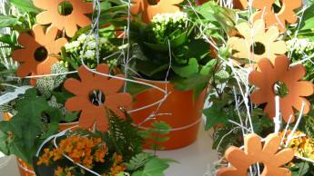 Markt für Topfpflanzen hat sich wieder erholt