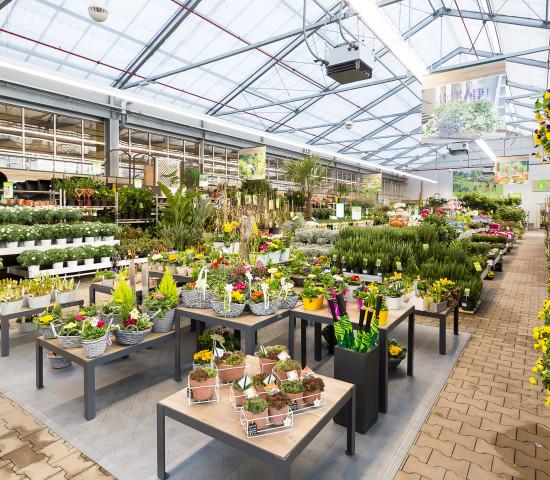 Dehner hat seinen ersten Standort in Erfurt im ehemaligen Maronde's Gartenparadies eingerichtet.
