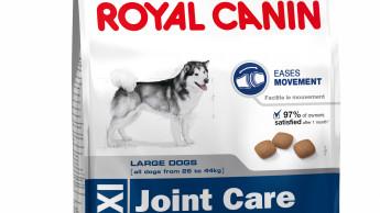 Große Hunde brauchen starke Gelenke