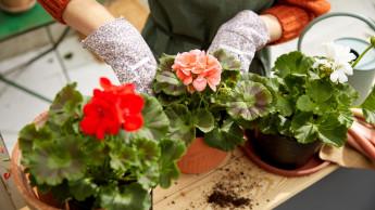 Kaufland will bis 2023 nur Pflanzen aus nachhaltigem Anbau