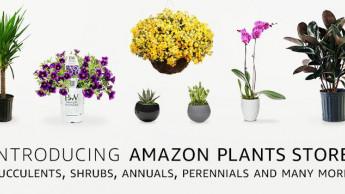 Amazon steigt ins Geschäft mit lebendem Grün ein