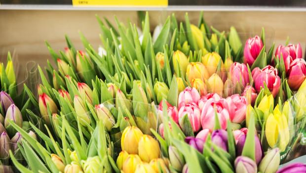 Schnittblumen bei Aldi sollen ab Ende 2019 ausschließlich aus nachhaltiger Produktion stammen.