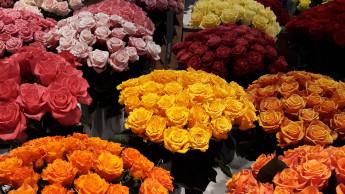 Valentin liebt seine Locals – außer die Blumenläden