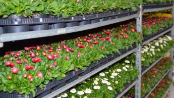 DUH prangert Einweg-Pflanztrays in der grünen Branche an