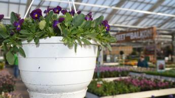 Gartenhandel erzielt im Februar zweistelliges Umsatzplus