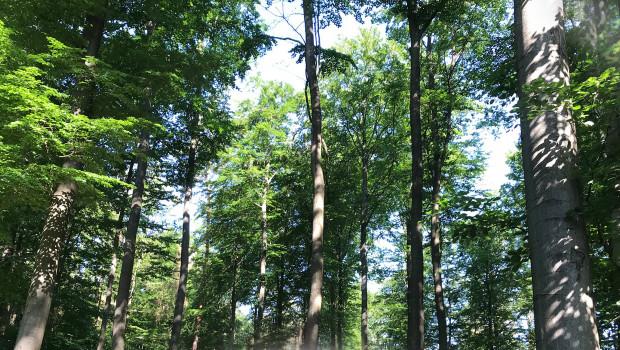 Mit seiner Jubiläumsaktion beteiligt sich das Unternehmen an einem Hilfsprojekt zur Aufforstung der Wälder in Deutschland.
