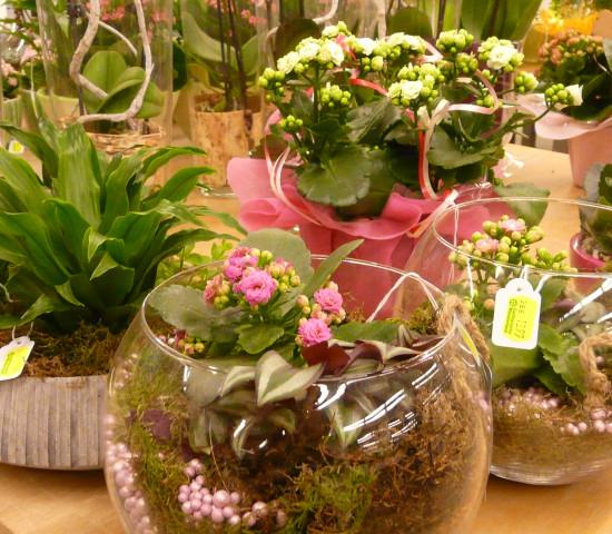 Während der Markt für Einzelpflanzen seit einigen Jahren stagniert, entwickelt er sich für fertig arrangierte und für mit Zimmerpflanzen dekorierte Schalen positiv.