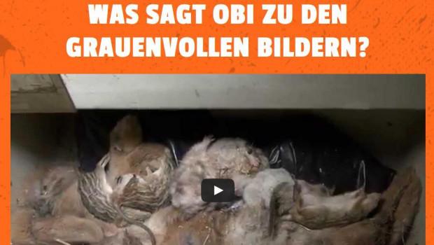 Obi steigt aus dem Verkauf von Kleintieren vollkommen aus.