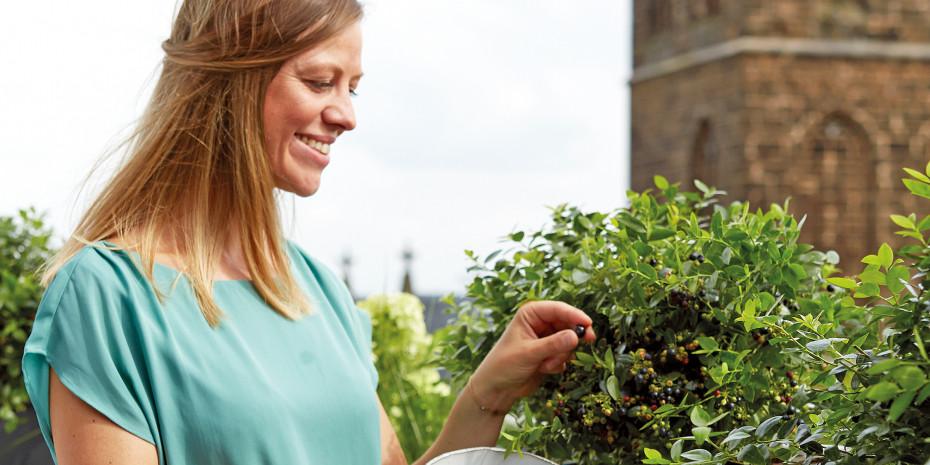 Den Trend zum City Gardening bedient die Mini-Blaubeerpflanze BerryBux.