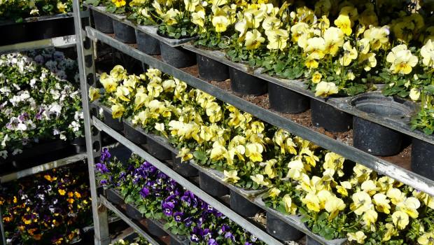 Pflanzen gelten als verderbliche Ware, dürfen also verkauft werden.