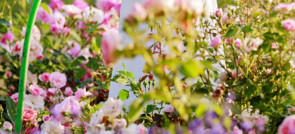Gartentrends