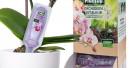 Vitalkur für Orchideen