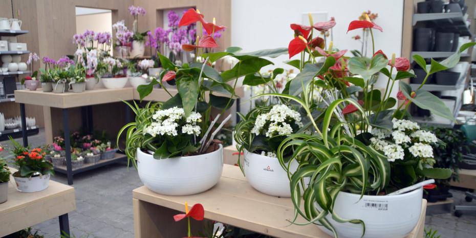 Blumen und Pflanzen, Fertigware