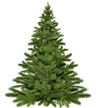 Nur noch 140 Tage bis Weihnachten - Verband Natürlicher Weihnachtsbaum e. V. wurde gegründet.
