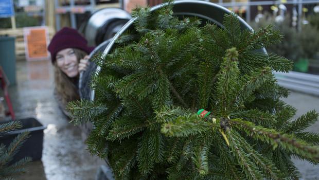 Ein Bild, das auch die Freiflächen der Baumärkte und Gartencenter künftig wohl früher im Jahr prägen wird: Der Verkaufsstart von Weihnachtsbäumen wandert immer weiter nach vorne im Kalender.