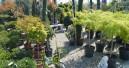 Gehölze werden auch für Gartencenter und Baumärkte teurer