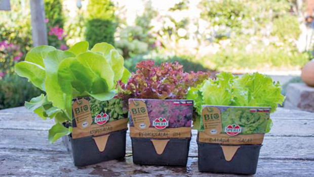 Sperli, Bio-Jungpflanzen