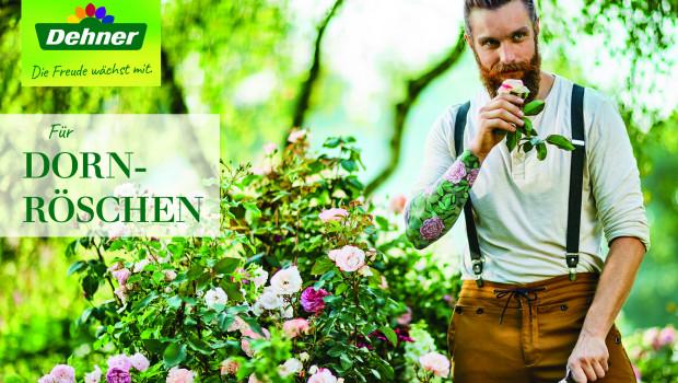 Eine Rose vom Hipster...