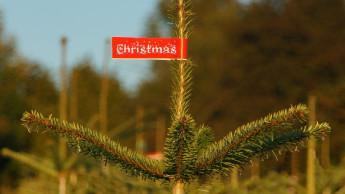 Rund 100.000 Christbäume mehr verkauft als im Vorjahr